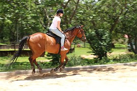 horses-816793__180