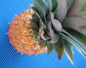 Důvodů, proč si dát ananas je celá řada.