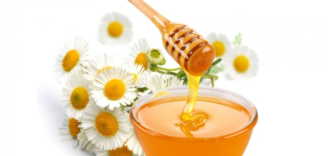 honey-daisys-238043